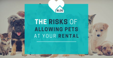 risks of allowing pets at your rental 2