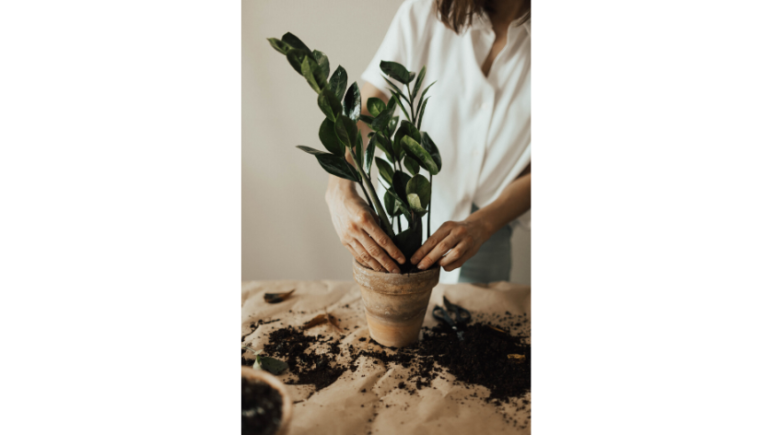 6 Low Maintenance Indoor Plants to Improve Your Mental Health ZZ Plant