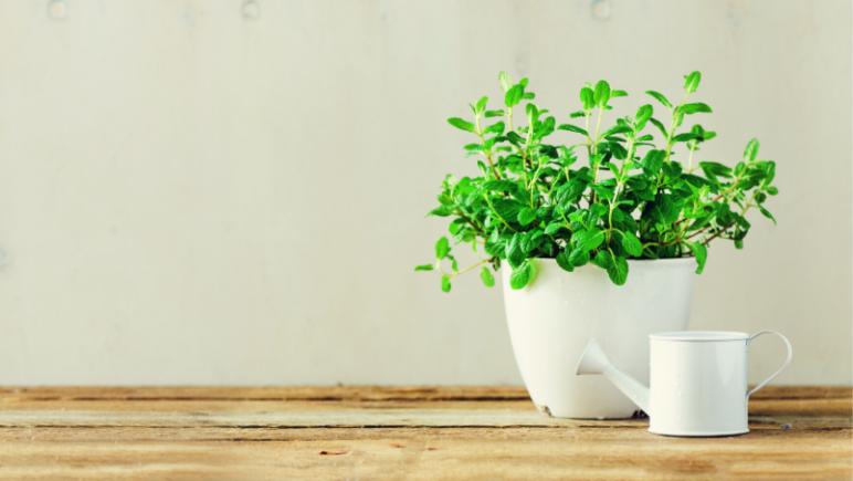 6 Low maintenance indoor plants to improve your mental health