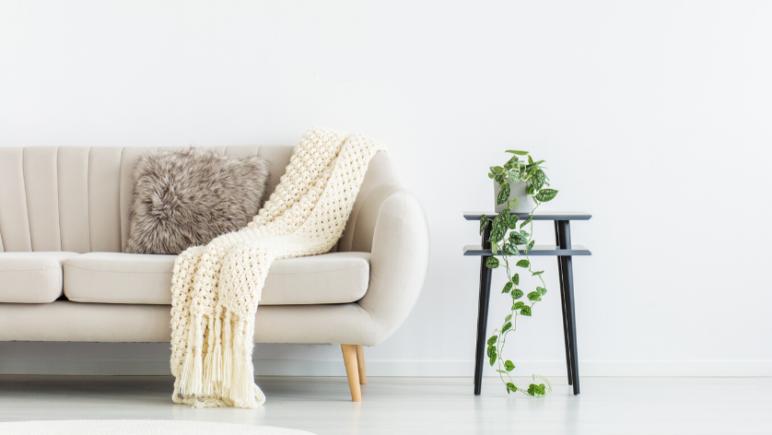 6 low maintenance indoor plants to improve your mental health devil's ivy