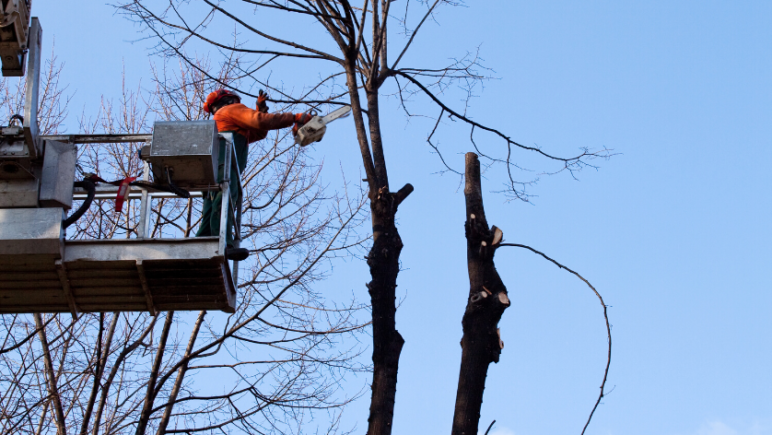five winter tasks to prepare your perth rental trim overhanging tree branches